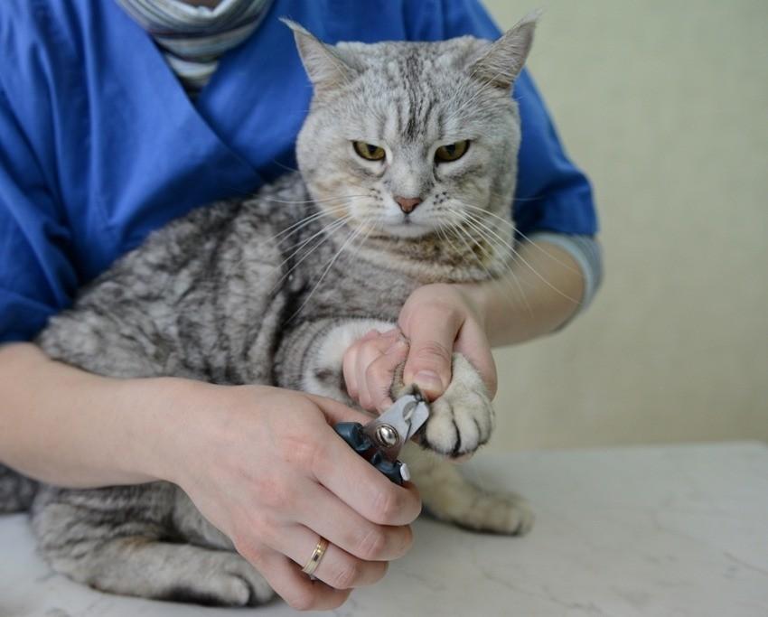 Хозяевам домашних кошек необходимо ввести обязательное подстригание когтей