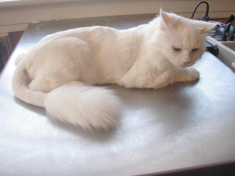 Избавление животного от лишней шерсти - это залог здоровья питомца