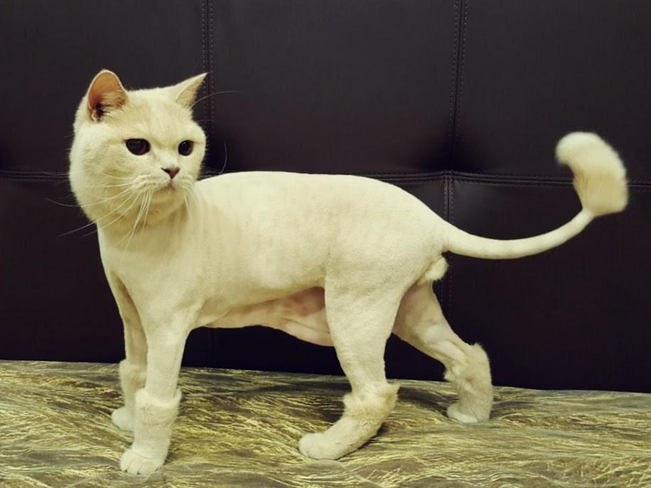 Рекомендуется подстригать кошку несколько раз в год