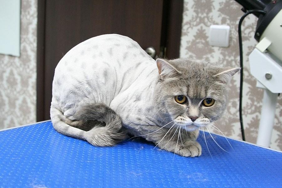 Стрижка значительно влияет на рост шерсти