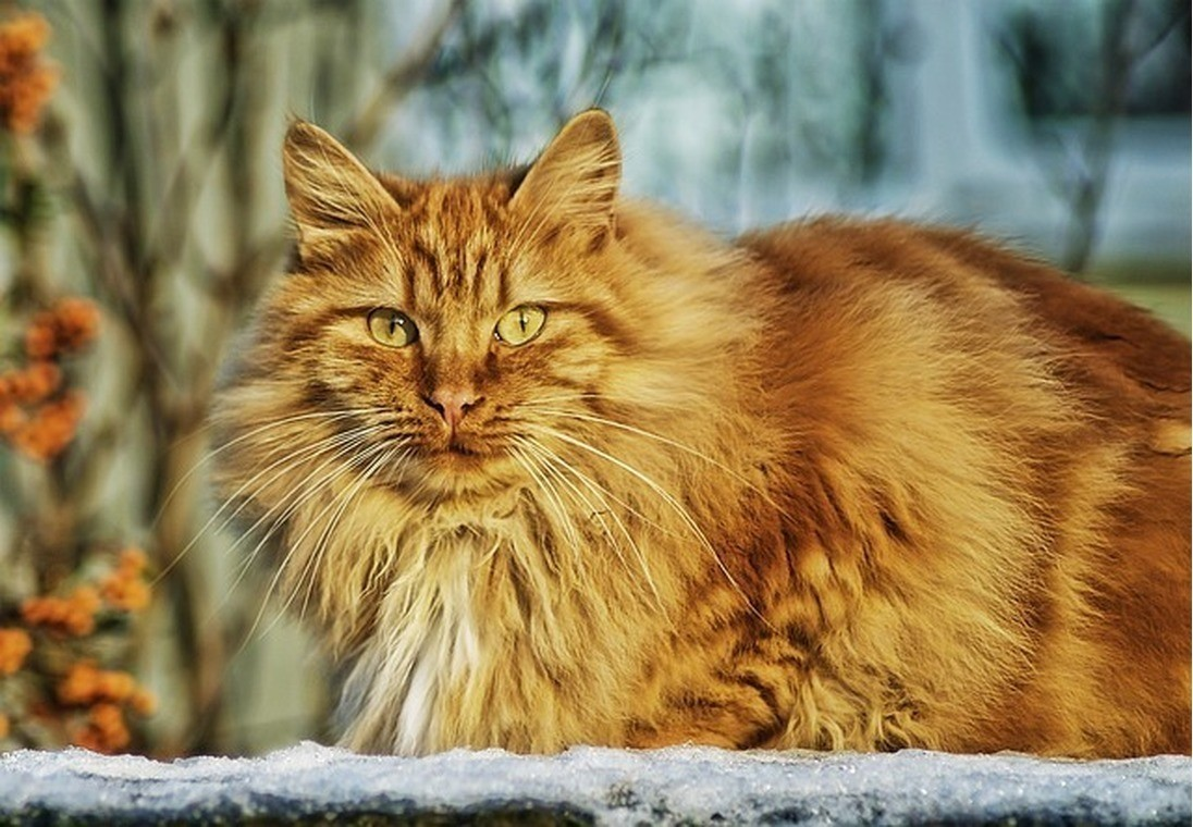 Как понять сколько кошке лет