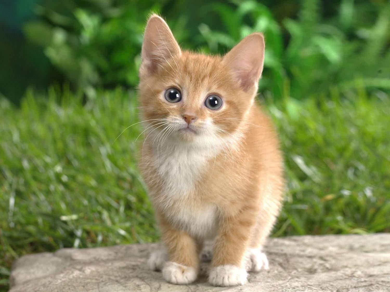 Котята обладают наивысшей активностью