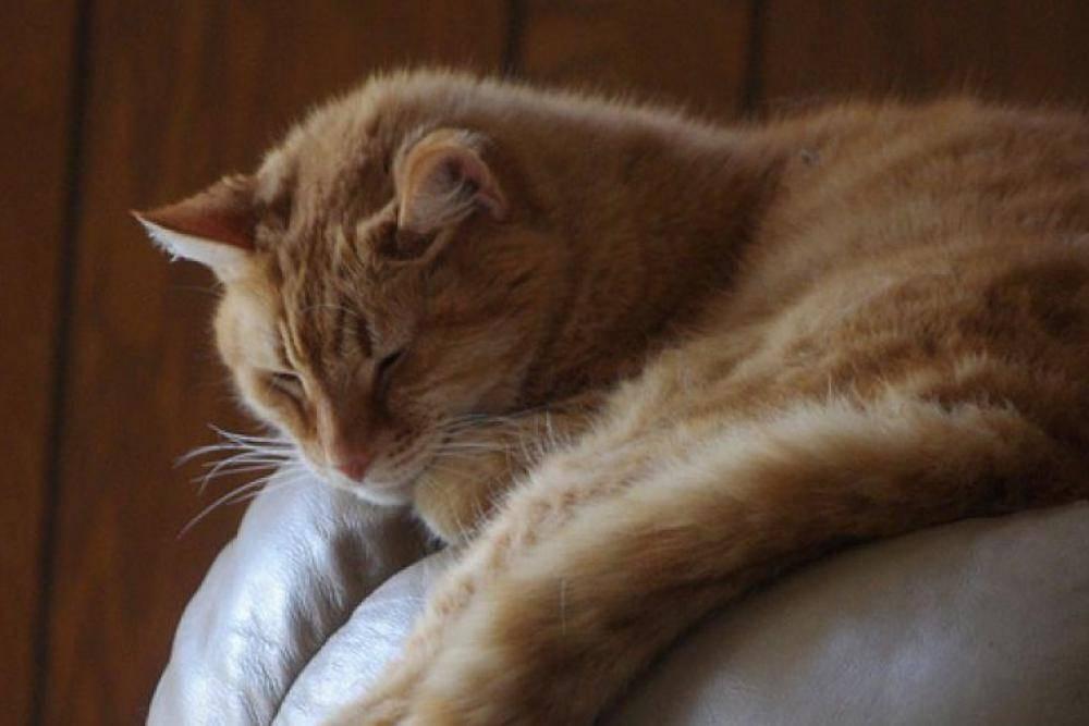 Более старое животное намного больше спит