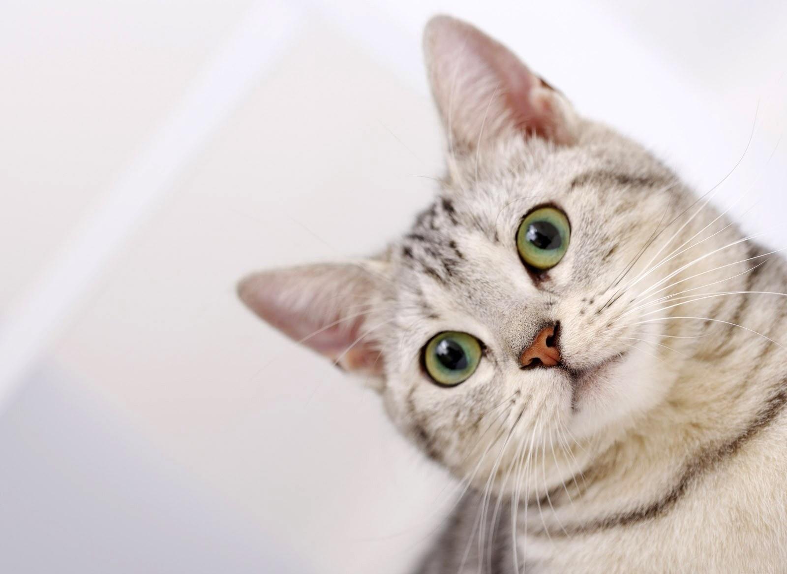 Очищать животному ушки рекомендуется 1 раз в 3 недели