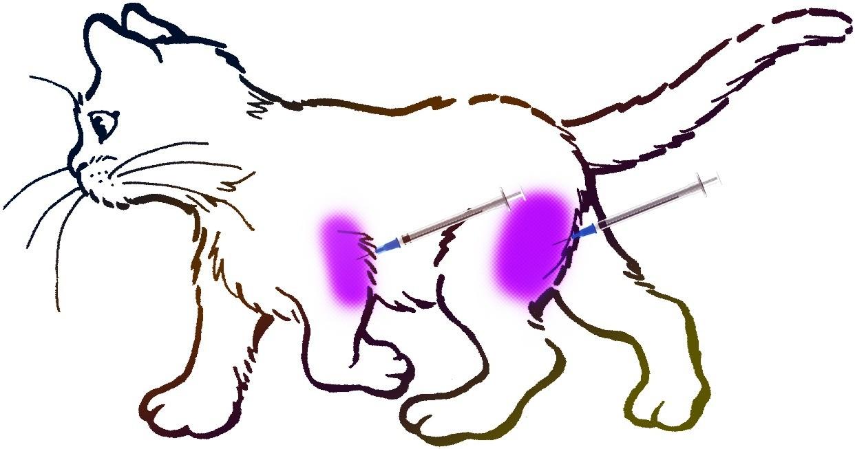 Места для внутримышечных уколов на теле кошки