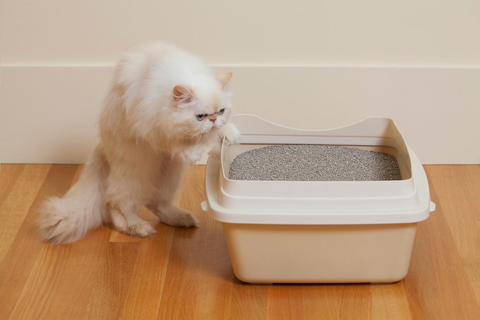 Как приучить взрослую кошку к лотку и отучить гадить где попало, видео