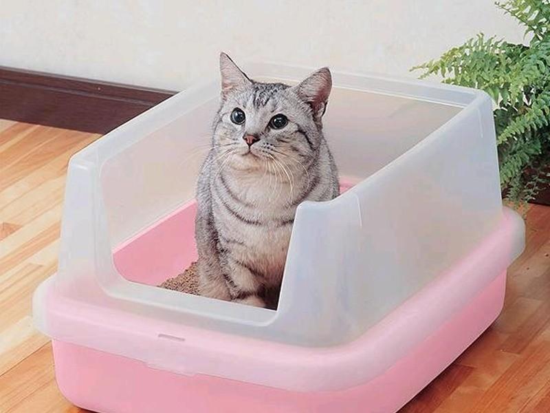 Один из котов какает рядом с лотком