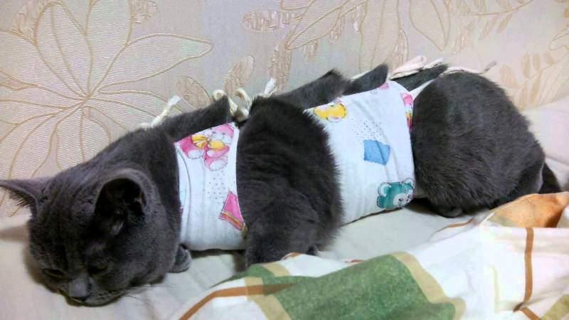 Первые 5 дней у кошки температура может повышаться выше 39°С