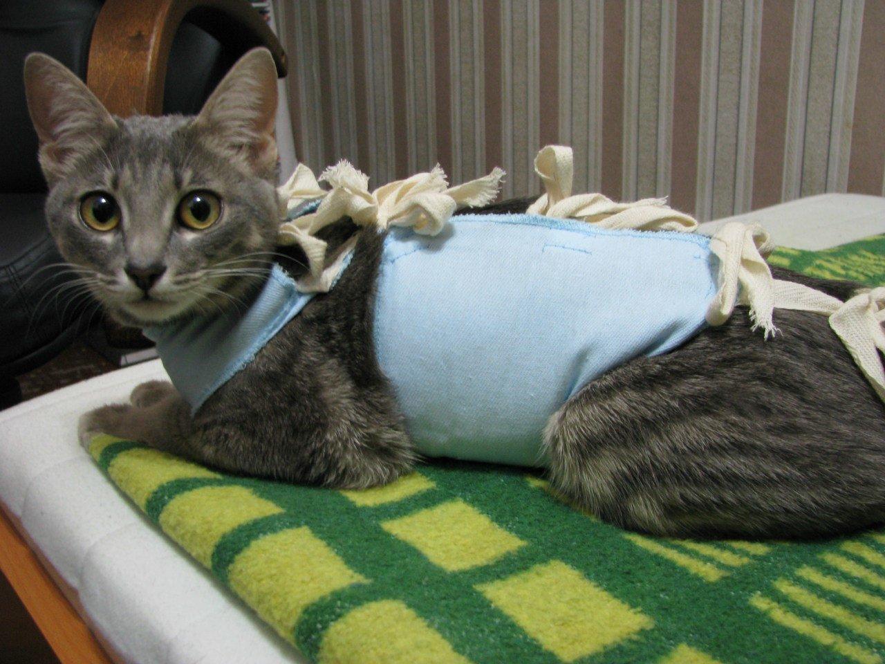 Хорошие ветеринарные клиники дают целые пособия по тому, как ухаживать за кошкой после операции стерилизация