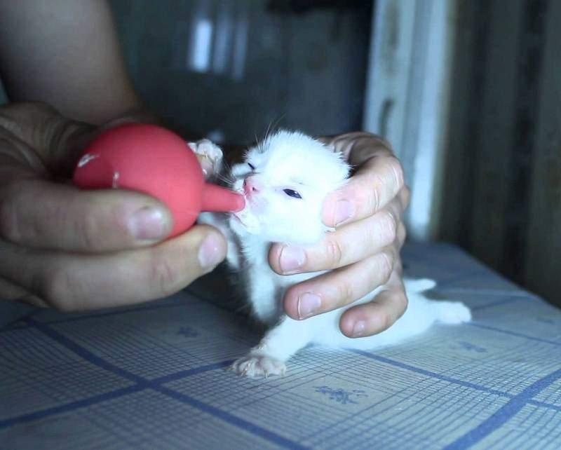 Процедуру кормления лучше всего проводить, когда животное лежит на животе