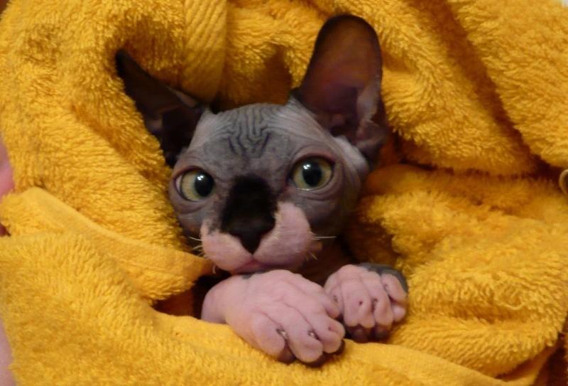 Для облегчения состояния кошки укутайте ее в полотенце