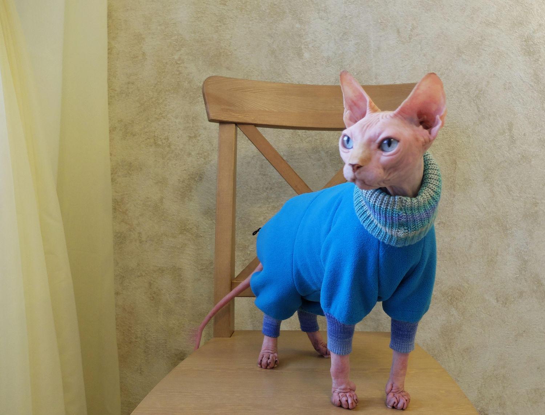 Зимой кошку стоит одевать в специальную накидку