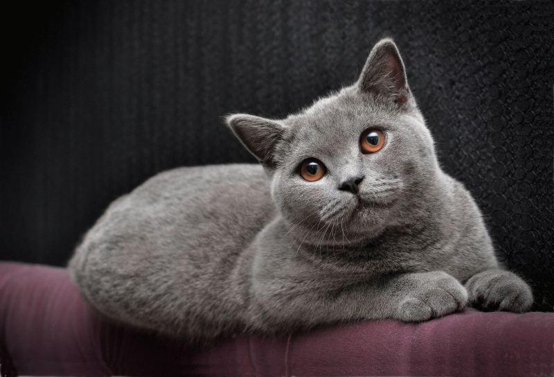 У взрослой кошки в норме температура тела должна составлять 38-39°С