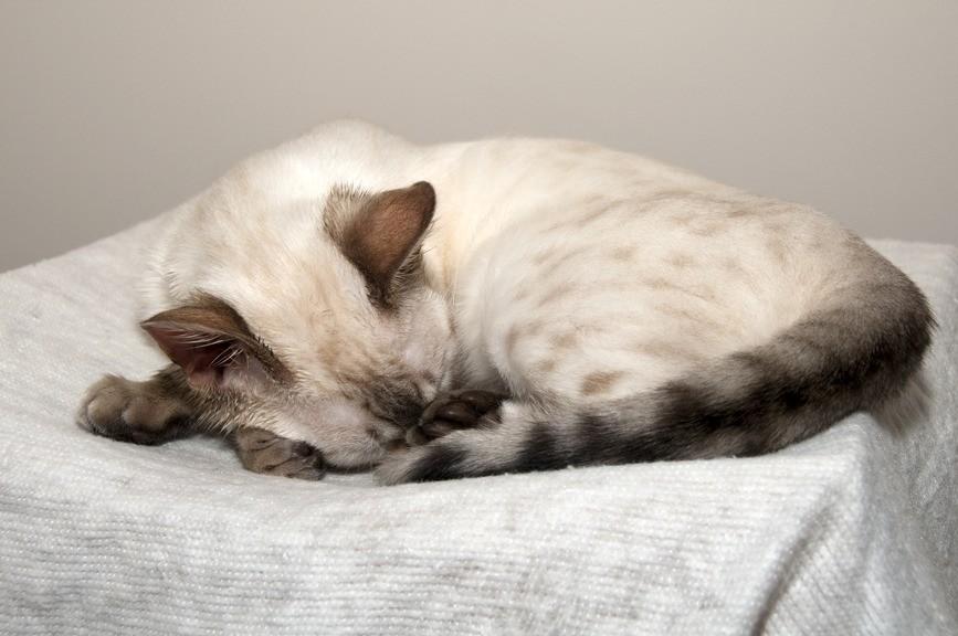 Если Вы заметили, что у кошки пониженная температура, немедленно обратитесь к ветеринару
