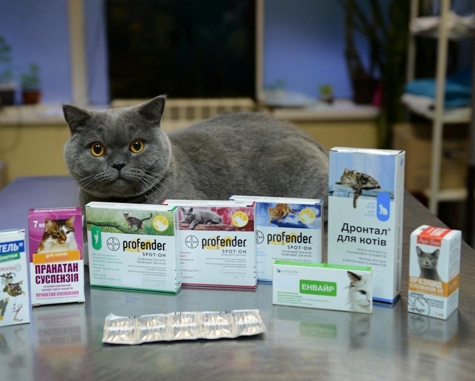 Бензилпенициллин для кота