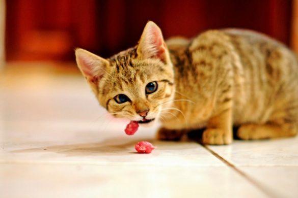 Правильное питание для кошки
