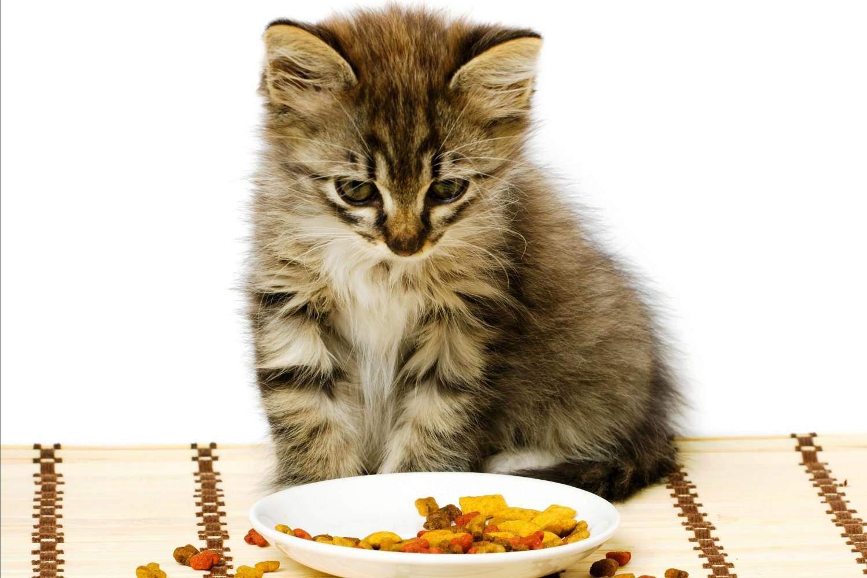 Смешивать животную и человеческую пищу специалистами не рекомендуется