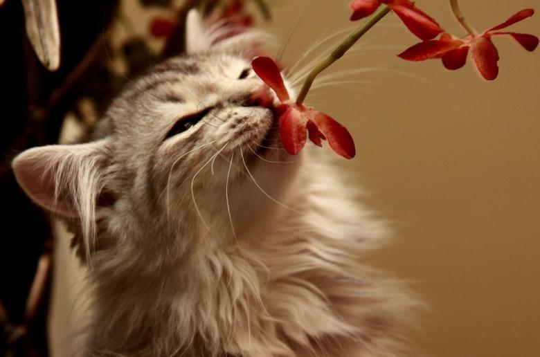 Кошка нюхает цветок