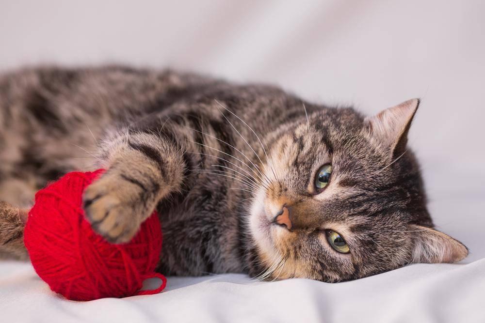Выбирая кошку в квартиру, убедитесь, что она не слишком шумная