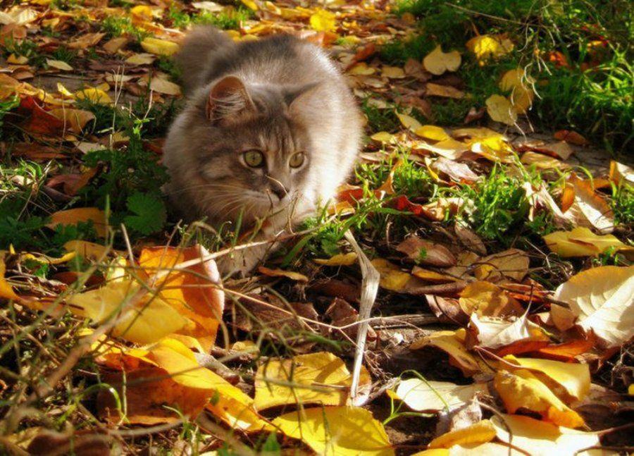 Осень – лучшее время для стерилизации