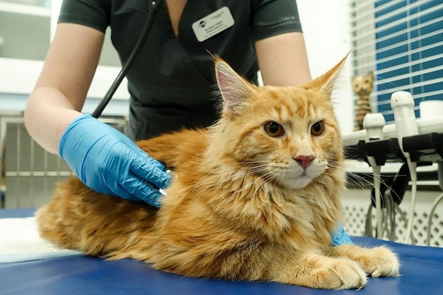 Если кошка перестала есть, покажите ее специалисту