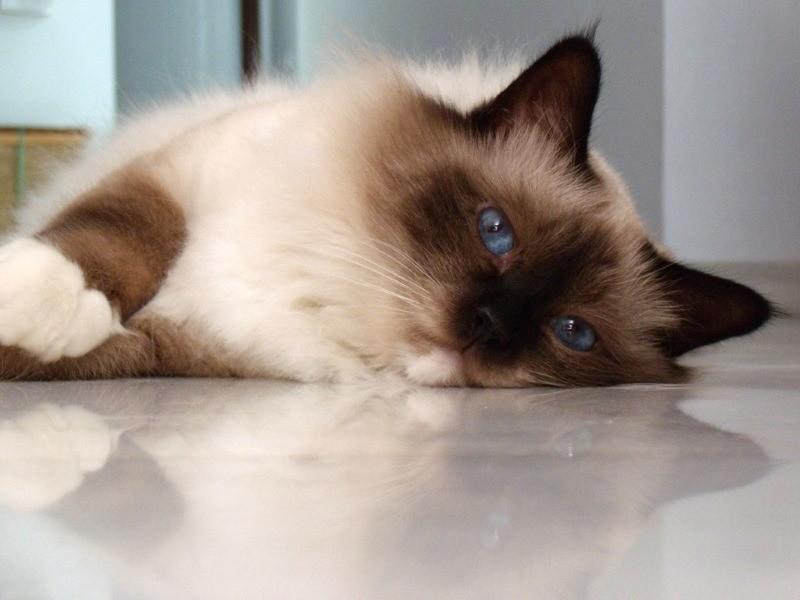 Потеря аппетита - симптом кошачьего кальцивируса
