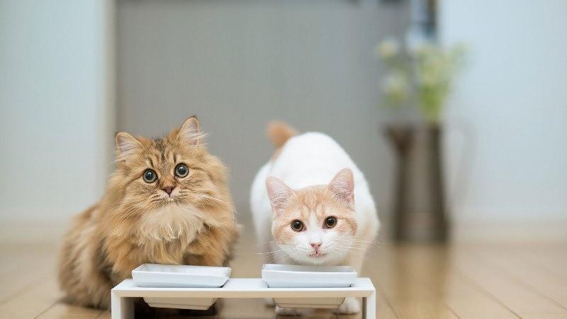 Кот не ест два дня что делать