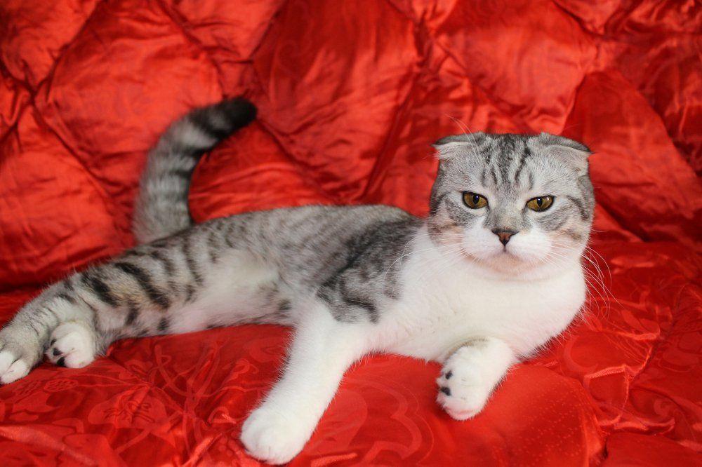 Кошкам полезно устраивать разгрузку