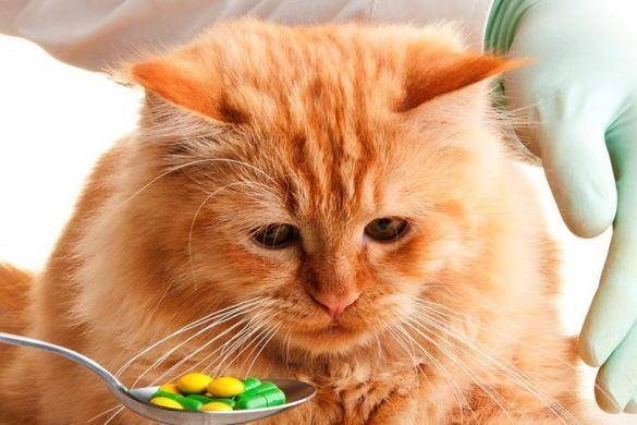 Коту дают таблетки при отравлении