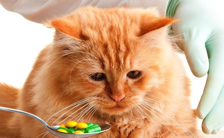 Кот отравился кормом что делать