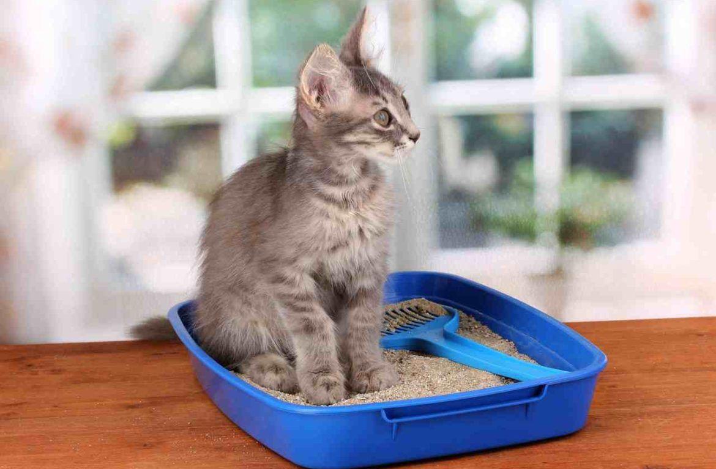 Если кошка перестала ходить в лоток, начните следите за ее поведением
