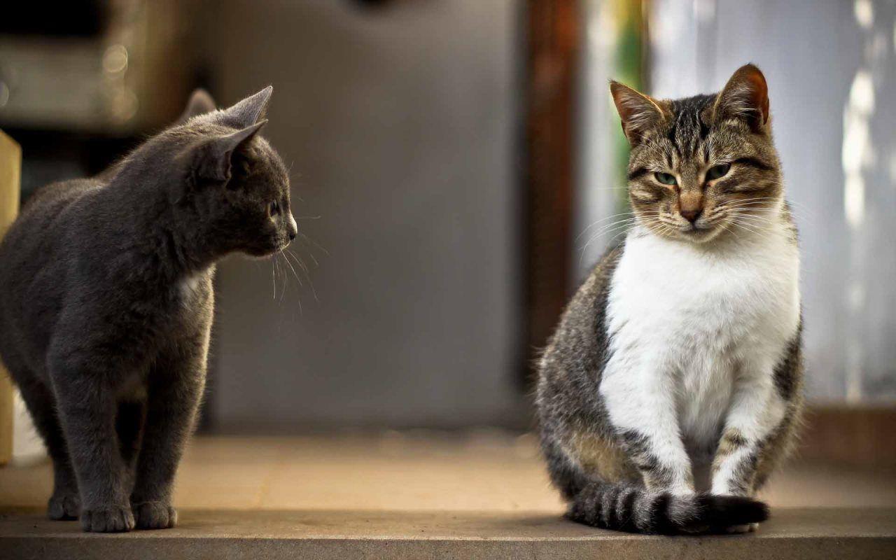 Если в доме несколько кошек, то лотков должно быть больше одного