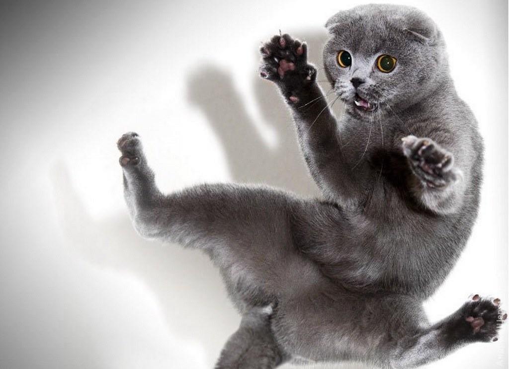 Повышенная активность кота свидетельствует о наличии лишая