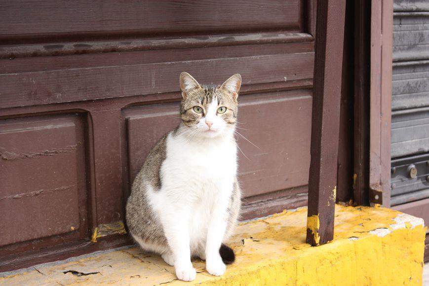 Ветеринары не рекомендуют стерилизовать беременную кошку