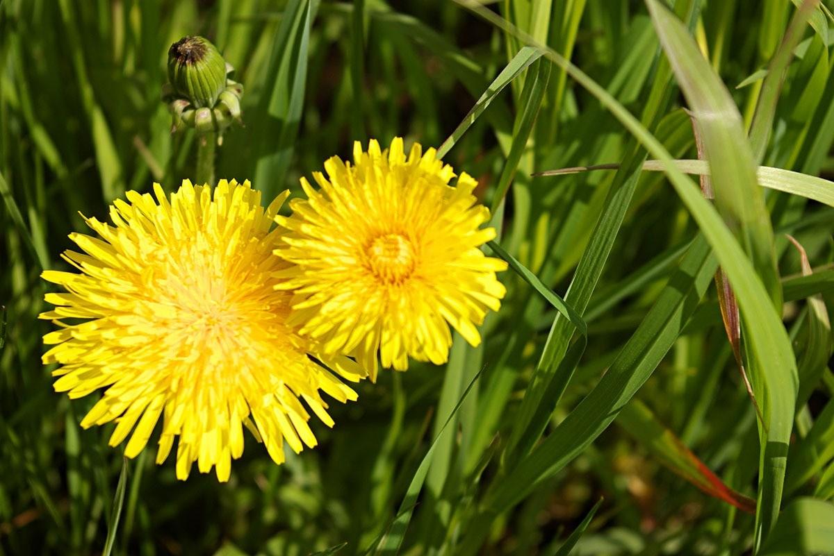травы от аллергии при беременности