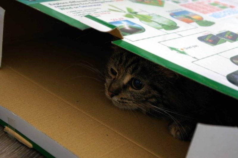 Отправляясь в ветеринарную клинику, положить питомца в затемненное место, например в коробку