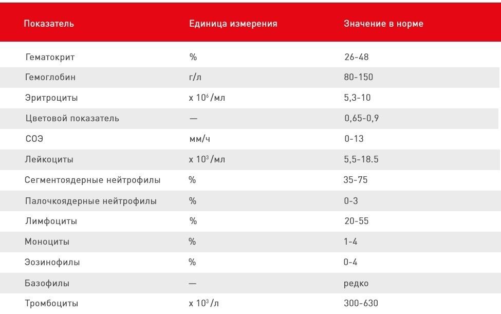 Значения показателей анализов у здоровых кошек