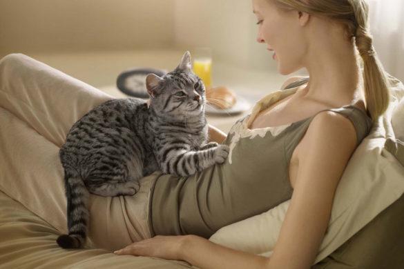 Кошка лежит на человеке