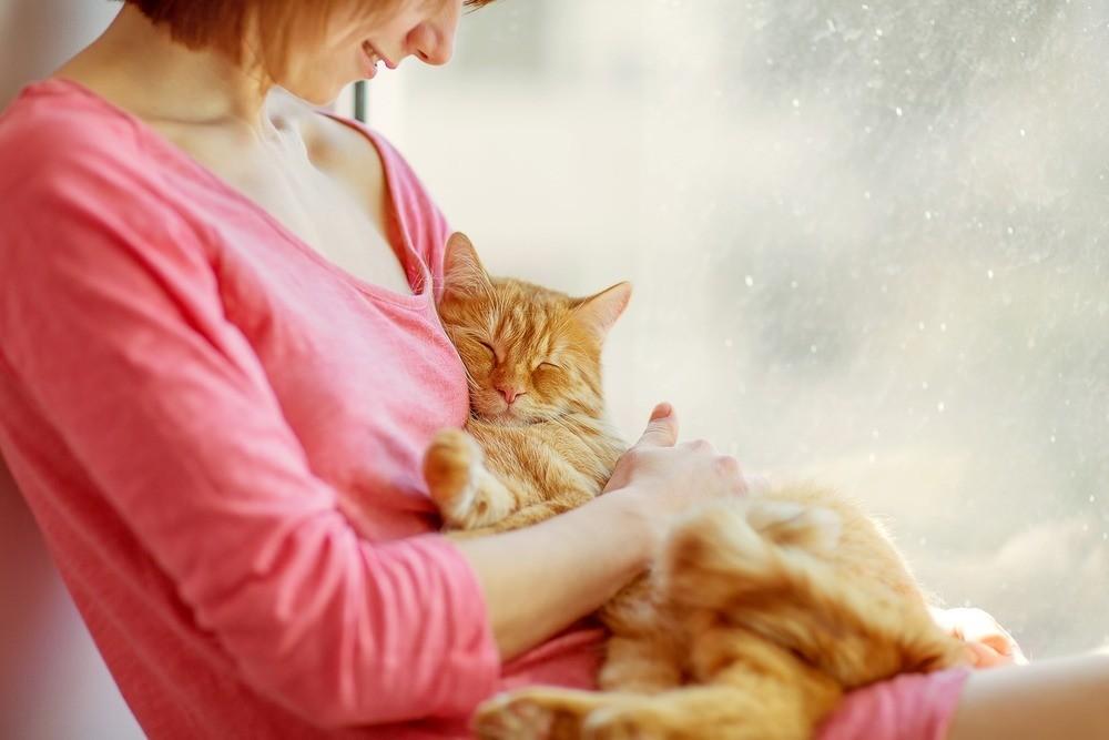 Кошки обладают сильным электростатическим полем