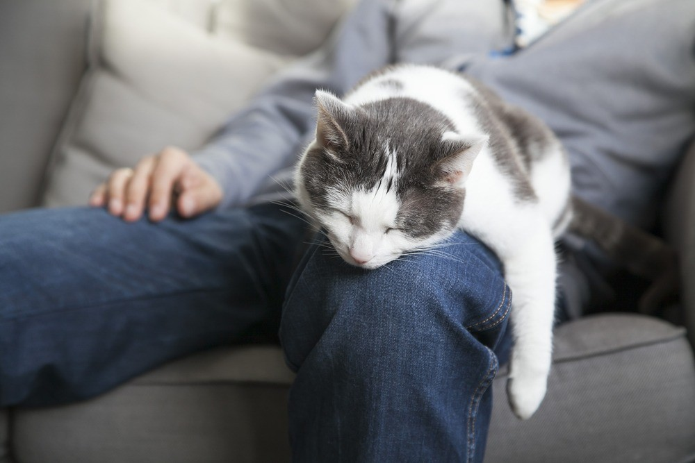Кошки – существа весьма эгоистичные и проявление каких-то нежных чувств без выгоды для них им не свойственно