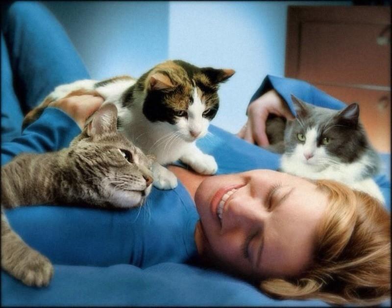 Кошка лезет на человека, чтобы согреться