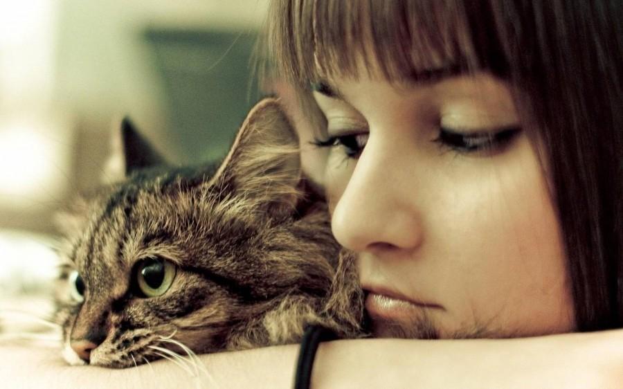 Больные органы обычно имеют повышенную температуру, которая влечёт кошек к ним