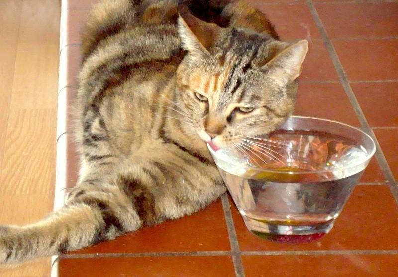 Кот не любит пить воду из поилки