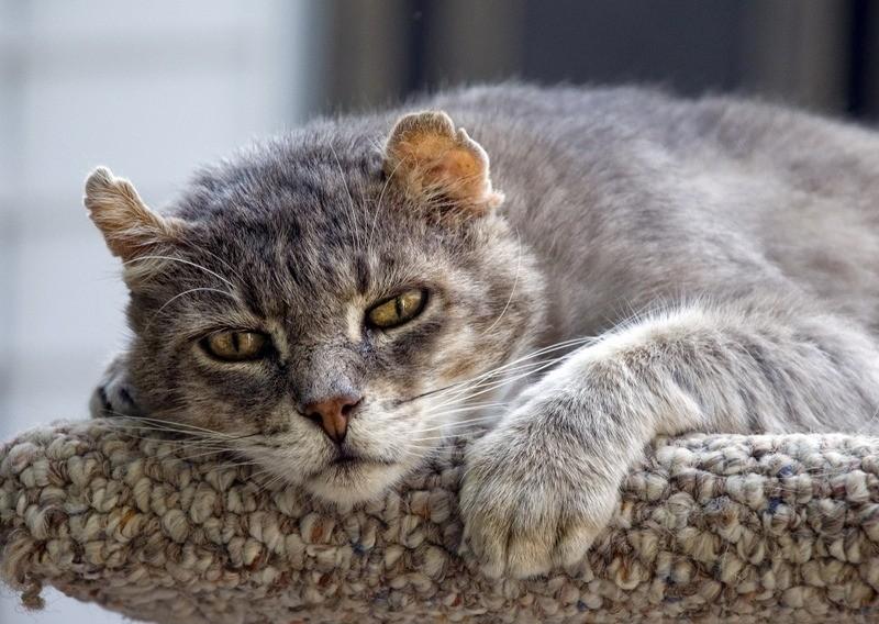 В старости кошки начинают больше пить воды