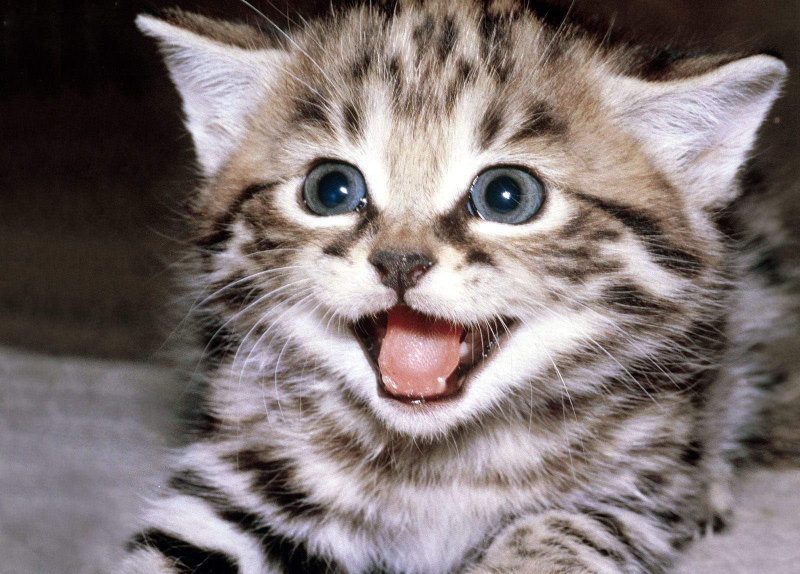 Среди кошек есть особи с различным темпераментом