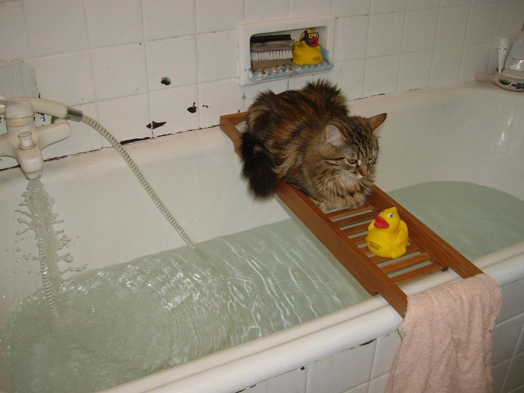 Приучайте животное к воде постепенно
