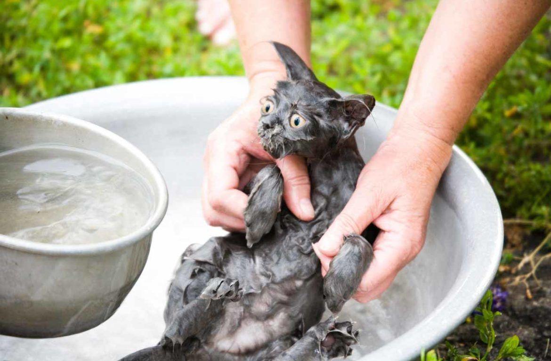 У кошек веками выработано отвращение и недоверие к воде