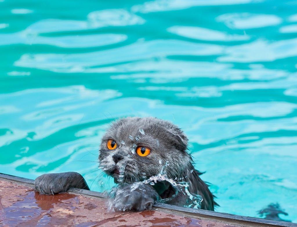 Боязнь воды может присутствовать у кошки, если она попадает в большой водоем