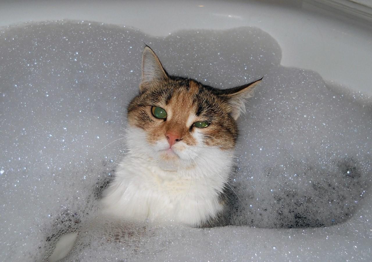 Кошкам не нравиться ароматные средства для мытья