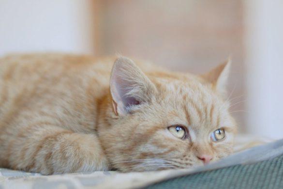 Пена изо рта у кошки